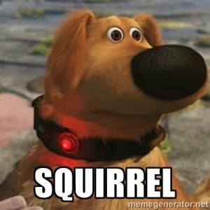 /posts/the-college-brain-as-a-sponge/squirrel.jpg